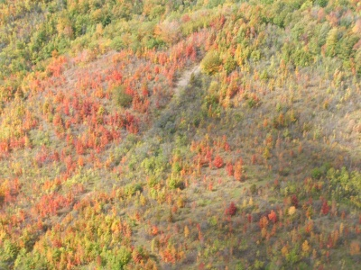 Fall Colour Scenic Flight